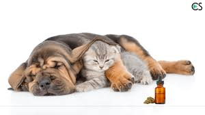 Essential CBD Extract for Pets - Bewertung - anwendung - inhaltsstoffe